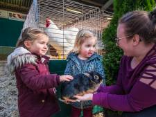 Knuffelen met konijnen op de Grenslandshow in Vriezenveen