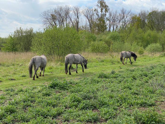 Grote grazers en honden krijgen ieder hun eigen plek in Dorent