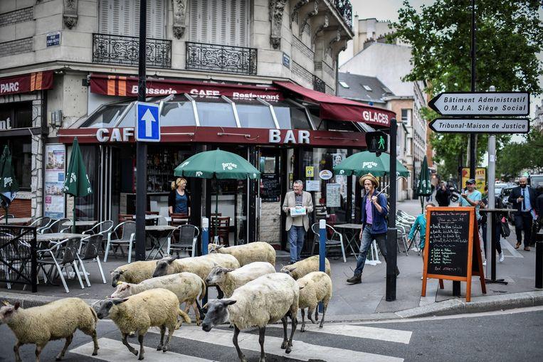 Herder Guillaume Leterrier van Les Bergers Urbains met zijn kleine kudde schapen.  Beeld AFP