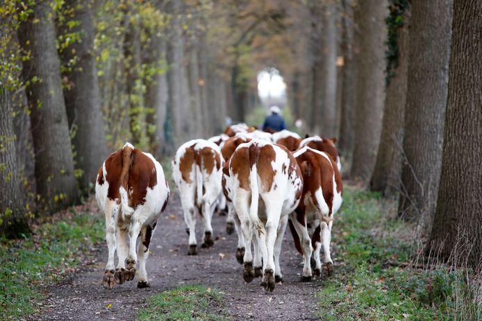 Veehouderijen zijn in Brabant verantwoordelijk voor een groot deel van de stikstofuitstoot.