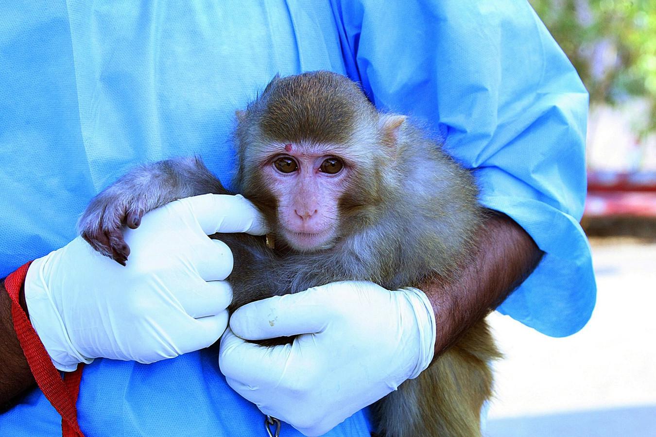 Het aapje dat Iran de ruimte in zou gestuurd hebben.