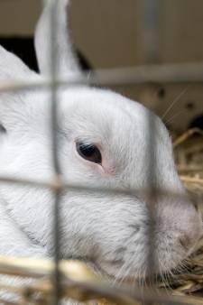 Dierenbescherming waarschuwt voor maden bij konijnen door de hitte