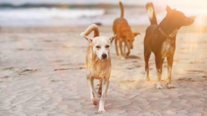 Walhalla voor baasjes en viervoeters tijdens hondenfestival aan zee