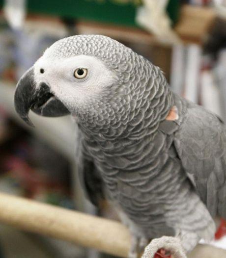 Wéér dieren in beslag genomen in Utrecht: nu 16 honden en 5 papegaaien aan Kloosterlaan