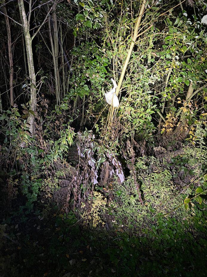 Aan een boom in een veld in Zemst werd een doos pralines opgehangen. Het werk van het vrijend koppel dat er al een tijdje actief is?