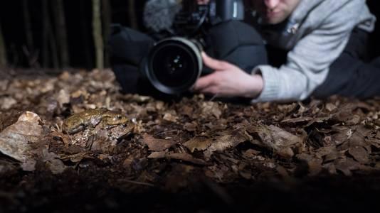 Om het liefdesleven van padden te filmen, kruipt Dick 's nachts rond op de bosbodem.