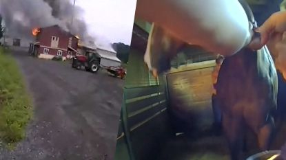 """""""Help ons trekken!"""" Agenten redden doodsbang paard uit brand"""