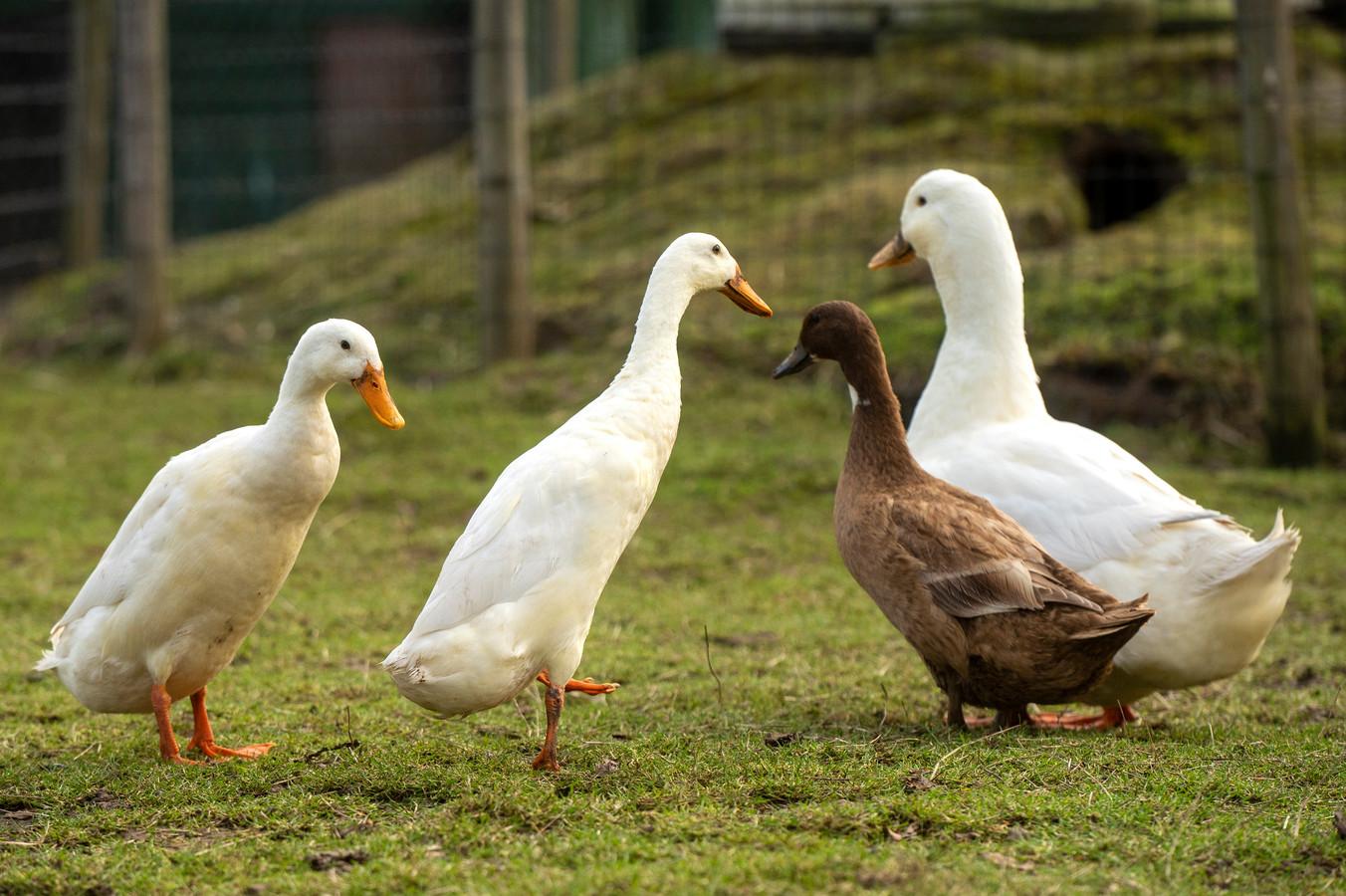 Guus, Donald, Jip en Janneke.