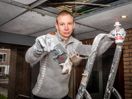 Flatbewoners worden gek van honderden ratten en ondraaglijke stank: 'Zo wil niemand wonen'