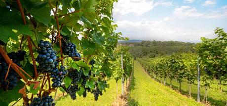 Frankrijk verwacht kleinste druivenoogst in 36 jaar