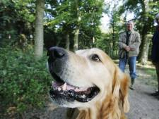 Deze gemeente wil de hondenbelasting afschaffen: 'Je krijgt er als belastingbetaler niets voor terug'