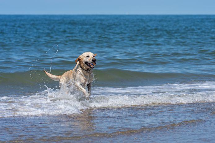 Vrijzwemmen voor honden bij De Punt
