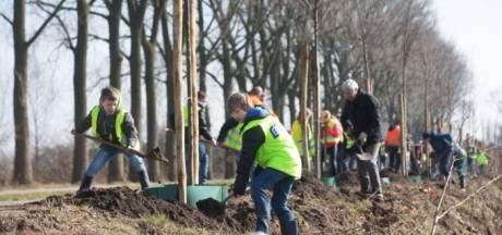 Gemeente Amersfoort geeft 1000 gratis bomen weg, en zo kun je er een krijgen