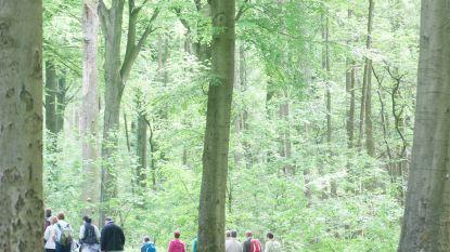 Damherten gered: Agentschap Natuur en Bos wijst aanvraag voor bijzondere jacht in Kluisbos af