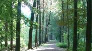 Natuurpunt en Gezinsbond op zoek naar vroege vogels in 't Veld