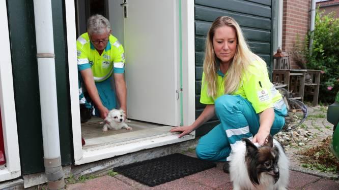 Dierenambulance doet méér dan alleen zorgen voor dieren: 'Vaak krijgen we bij hulpweigeraars toch iets voor elkaar'