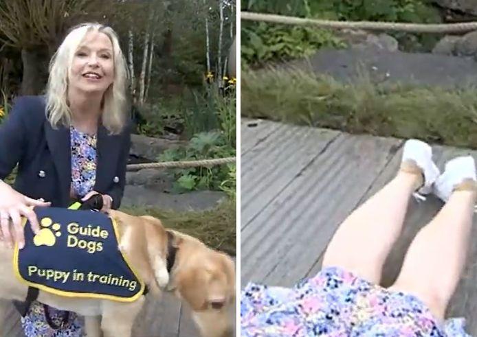Carol Kirkwood, de BBC Breakfast, s'est retrouvée au sol emportée par un chien d'aveugle un peu trop enthousiaste.
