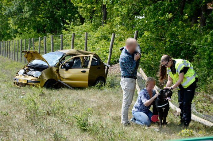 De hond wordt geknuffeld door omstanders.