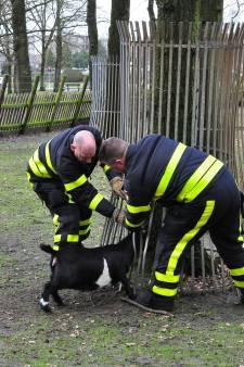 Brandweer bevrijdt vastgelopen geitje in Waalwijk