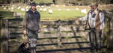 Markelose schapen naar de slager als provincie niet met geld over de brug komt