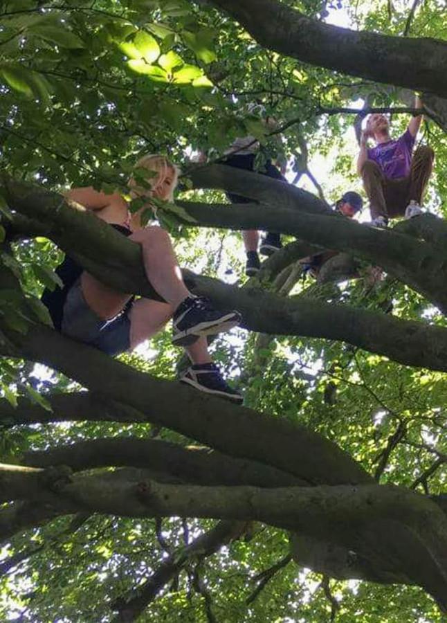 Gerda in de boom die ze zo liefhad.