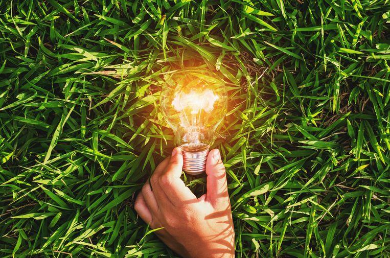 Tuincentra zoals Aveve, Horta en Intratuin aanvaarden ecocheques voor bijna hun volledige gamma Beeld Shutterstock