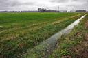 In dit deel van de Oranjepolder in West-Brabant moet een zonnepark gerealiseerd worden. Aan de horizon de windmolens die al op bedrijventerrein Weststad staan.