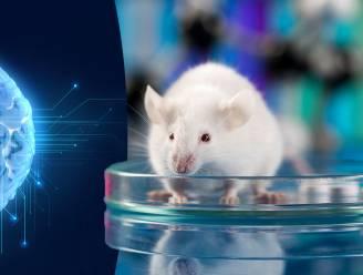 Aantal dierenproeven daalt met een derde in vijf jaar in Brussels Gewest