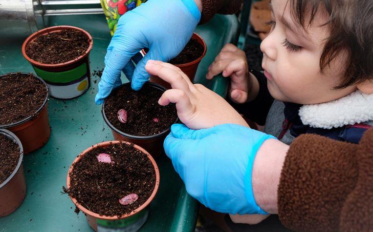 Zaadjes, stekjes en plantjes kun je dit weekend ruilen. Beeld Shutterstock