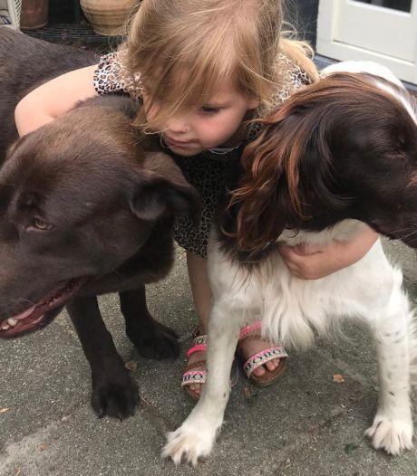 Twee honden ontvoerd door man in wit busje: Lola teruggevonden in Biest-Houtakker, maar waar is Pleun?