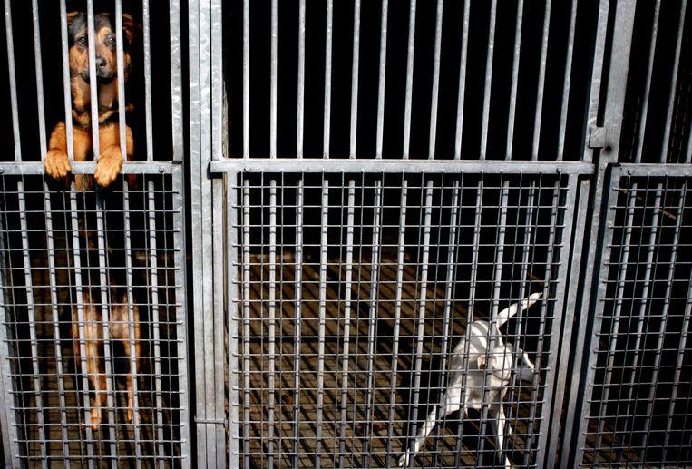 De dagopvang van dierenasielen zit weer volgeboekt, nu mensen vaker naar kantoor gaan. Beeld Hollandse Hoogte /  ANP