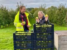 Vrijwilligers plukken laatste appels voor voedselbanken in Nederland