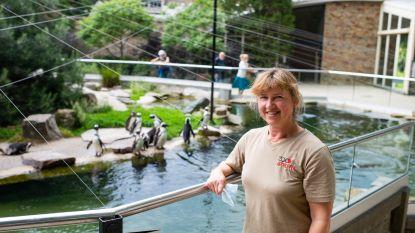"""Heidi verzorgt al 25 jaar de pinguïns van de Antwerpse Zoo: """"Geboorte van Urban was een speciaal moment"""""""