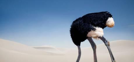 Waarom we onze kop in het zand steken als het moeilijk wordt