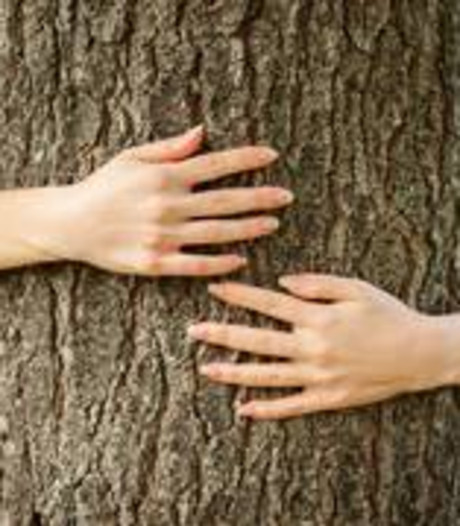 Voorst deelt 400 gratis bomen uit