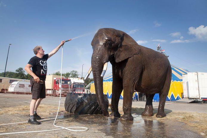 Directeur Lutz Freiwald  verzorgt olifant Buba in 2016 toen het circus in Zoetermeer stond.