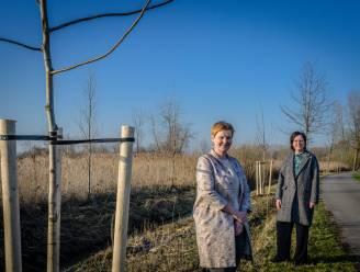 """Twintig extra notelaars langs Scheldedijk aan Grembergen Broek: """"Historisch gebruik weer tot leven roepen"""""""