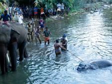 Gruwelijke dood zwangere olifant nu ook politieke rel in India