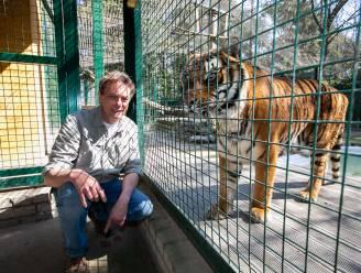 """""""Een telefoontje van de politie, 20 jaar geleden. En plots zat ik daar met onze eerste leeuw"""": als Tiger King een Vlaamse reeks was, zouden de makers verhalen halen bij Sil Janssen"""
