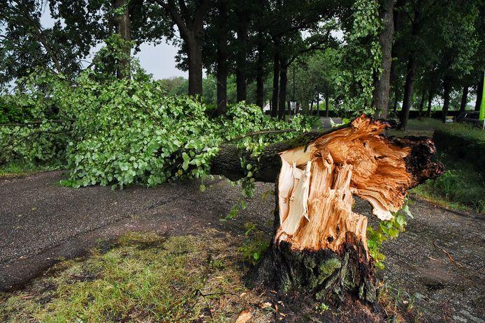 In Oisterwijk viel een boom om.