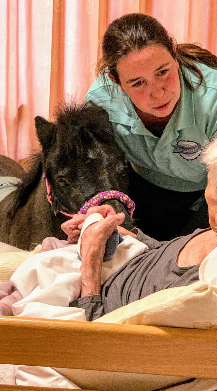 """Anika Ketelaars met Oprah bij het bed van een 98-jarige bewoner. ,,Een paard op bezoek? Ja, dat zie ik ook wel."""""""