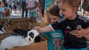 Illustratiebeeld dierenmarkt