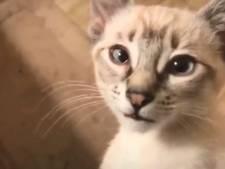 Poezenvrienden opgelet: Hier kun je 70 minuten lang kattenfilmpjes kijken