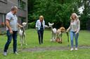 De alpaca's werden woensdagavond officieel overhandigd aan WZC Sint-Lodewijk. Hier op beeld: drie van de woonzorgcentrummedewerkers die de alpaca's verzorgen en trainen