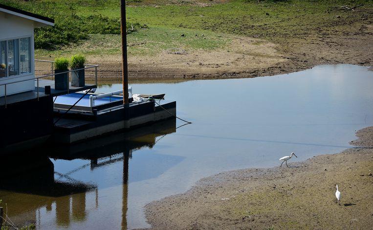 Vanwege de droogte staat het water in de Waal laag. Woonboten dreigen droog te komen liggen.  Beeld Marcel van den Bergh