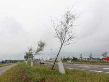 Kunstenaar over debacle Witte Lint Zutphen: 'Dit is heel erg'