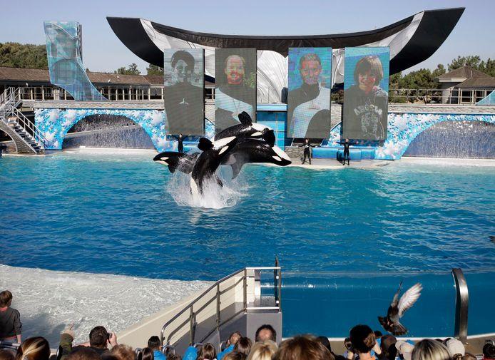 Archiefbeeld: een orkashow in SeaWorld in San Diego