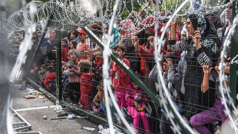 Vluchtelingen aan de Hongaars-Servische grens. Beeld AFP