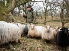 Schapen domineren het leven van Wil en Judith: 'Slimme tantes in de kudde eisen hun warme jas terug'