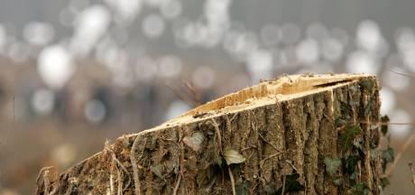 Natuurmonumenten herstelt model van Maasvlaktecentrale in bos